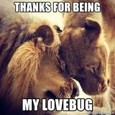 Lovers Meme - thanks for being my lovebug lion lovers meme generator