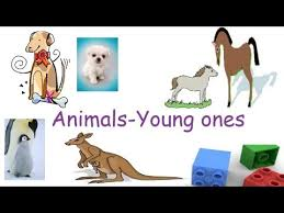 animals and their young ones animals and their babies flash cards