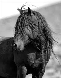wild horse print untamed spirit wildshots photography