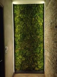 Interior Plant Wall 306 Best Stabilized Plants Images On Pinterest Vertical Gardens