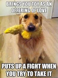 Dog At Vet Meme - beautiful 62 best dog memes images on pinterest wallpaper site