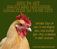 Backyard Chickens 101 by How To Get Backyard Chickens Legalized In Your City Ferndale