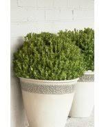 Live Topiary Tree - shrubs you u0027ll love u0026 topiaries for shape monrovia