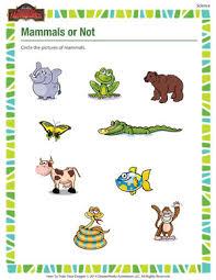 mammals or not u2013 science printable for kindergarten u2013 of dragons