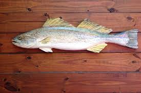 Fish Home Decor Weakfish 34
