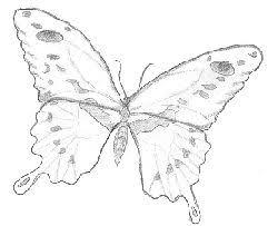 mel stampz 60 butterflies printed on vellum u0026 cardstock