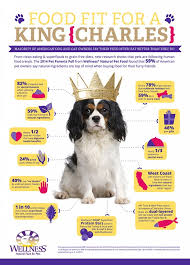 infographic what pet parents feed their dogs trudog