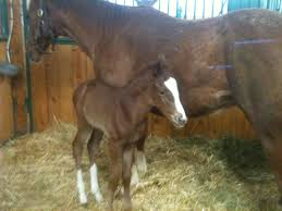 the new arrivals in the barn u2013 a horse story pet sitter and dog