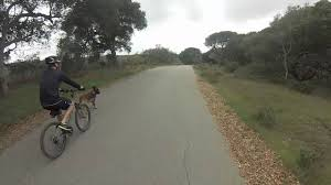 belgian malinois vermont belgian malinois mountain biking gopro youtube