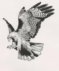 hawk tattoo u2026 pinteres u2026