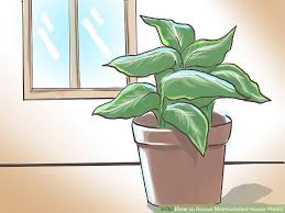 how to revive malnourished house plants 7 steps with pictures