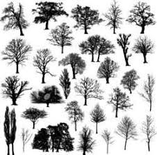 bare tree silhouette clip images plant patterns