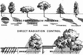 types of tree form shadow pattern above direct radiation