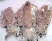 cuisiner la seiche fraiche poissonnerie lachenal produit tête de seiche fraîche