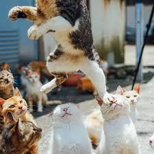 Cat Memes Tumblr - kitty cat memes tumblr