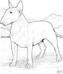 english bull terrier coloring page free printable coloring pages
