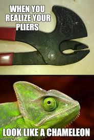 image tagged in chameleon chameleons jbmemegeek memes funny
