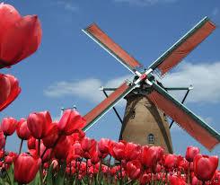 windmill in holland no sakura city tulip festival in japan