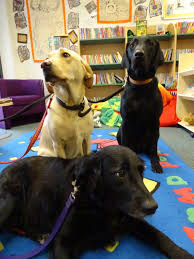 Queen S Dog Queens Hill Primary Dogs