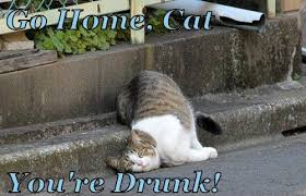 Drunk Cat Meme - go home drunk go home your drunk funny memes for more funny