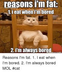 When I M Bored Meme - reasons m fat cataddictsanony mouse i eat when im bored 2 im always