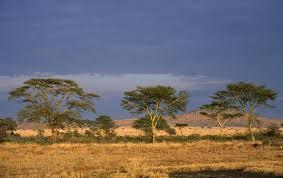 africa wide