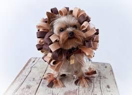 lion dog costumes korrectkritterscom