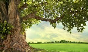 five trees that need a arbor day