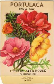 flower seed packets vintage tucker flower seed packet lithograph portulaca tattoo