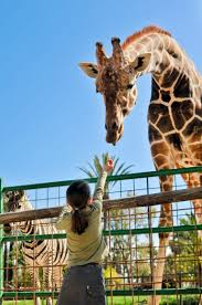 why the san diego zoo is a healthy way to spend your day in san