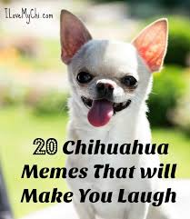 Memes To Make You Laugh - 20 chihuahua memes that will make you laugh jpg