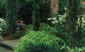 Flower Shrubs For Shaded Areas - conifers for shade fine gardening
