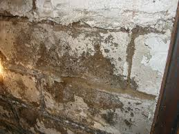 Mold On Basement Walls Cinder Block - what if i don u0027t fix my leaking basement prugar consulting inc