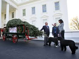 White House Christmas Decorations 2015 Images by The White House Christmas Tree Christmas Lights Decoration