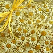 100 small white daisies yellow and white dried daisies wedding