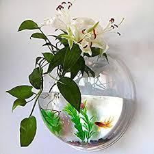 Beta Fish In Vase Amazon Com Wall Mounted Fish Bowl Bubble For Goldfish U0026 Beta Or