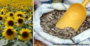 the amazing health benefits of sunflower seeds