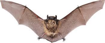 small bat small bat open wings transparent png stickpng