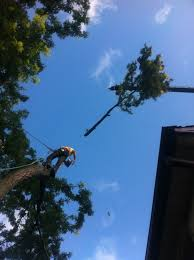 tall tree removal