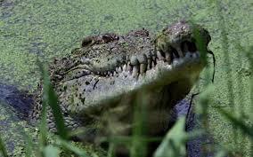 man killed by crocodile in australian national park
