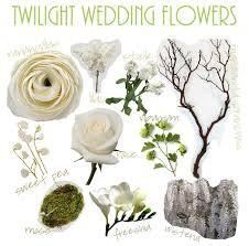 wedding flowers names flores sol twilight wedding flowers