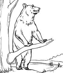 brown bear standing tree coloring pages place color