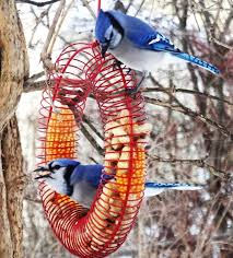 Backyard Birds Store by 46 Best Bird Is The Word Images On Pinterest Pine Animals And