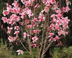 ornamental backyard garden chsbahrain