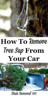 how to remove tree sap from car remove tree sap hacks and