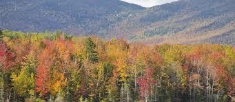 fall foliage hampshire