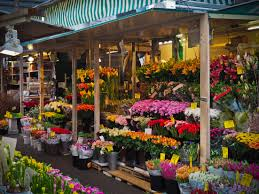 flowers for sale free images plant city vendor marketplace colorful
