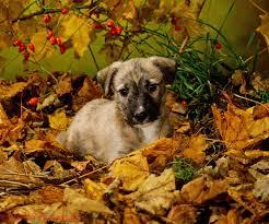 halloween pet background longdog puppy among autumn leaves photo wp32538
