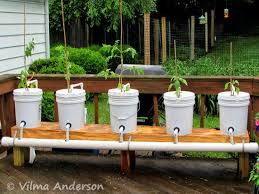 still fab and traveling growing tomatoes the hydroponics way