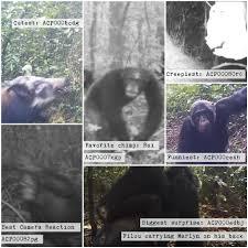 chimp u0026 see talk
